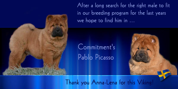 Welcome Commitment's Pablo Picasso!-2